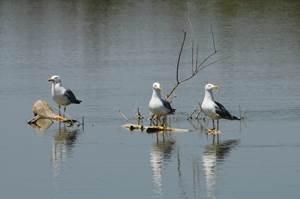 Escapades nature - Syndicat Mixte de la Camargue  Gardoise
