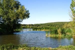 Reveil Ornithologique à  l'étang de la Capelle-Masmolène