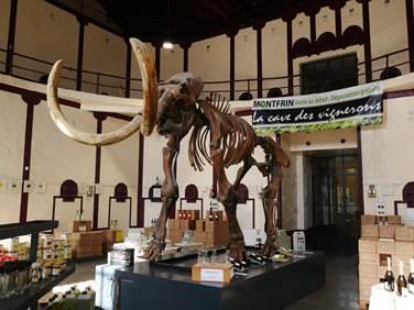 Arthur, le mammouth de Montfrin