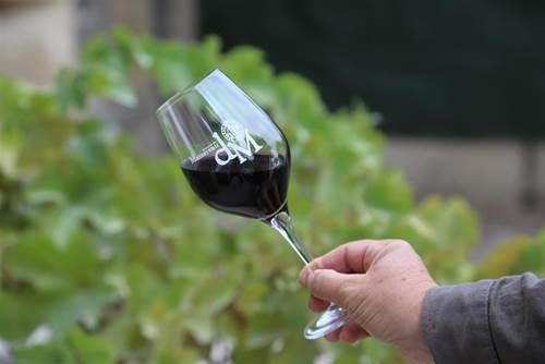 Visite du Vignoble et dégustation de vin