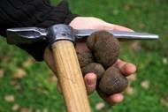 Les Truffières d'Uzès