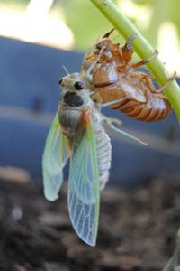 Insectes et compagnies