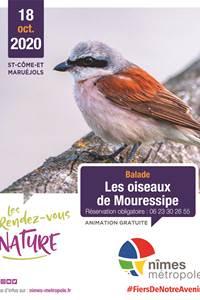 RDV Nature Les Oiseaux de Mouressipe