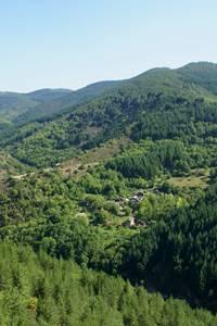Mont Aigoual et son arboretum