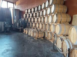 Caves Domaine Reno - Collioure Vineyards