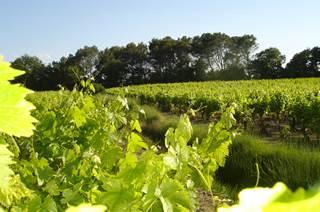 AOP Languedoc Sommières