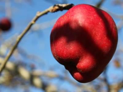 La Phytothérapie: les plantes du Bien-être