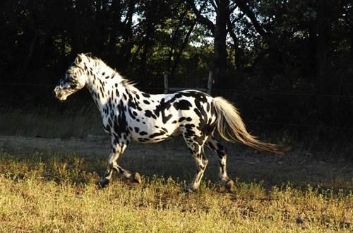 poney-club_du_mas_nouguier_6_-_st_cesaire_de_gauzignan ©