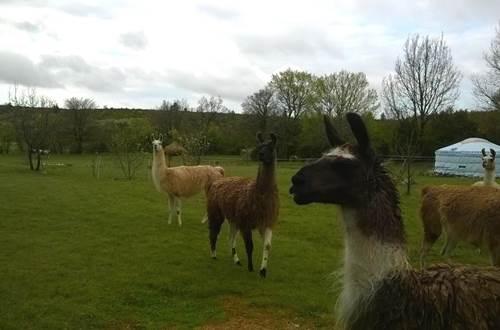 Causses et Lamas 7 ©