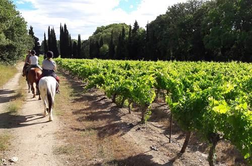 Balade à cheval et à poney dans les vignes du Domaine ©