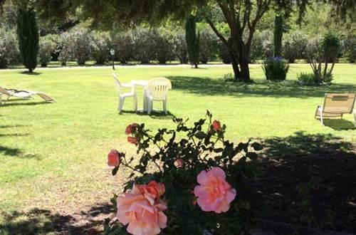 L'Hacienda - rose du jardin ©