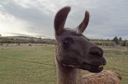 Causse et Lamas 7 ©